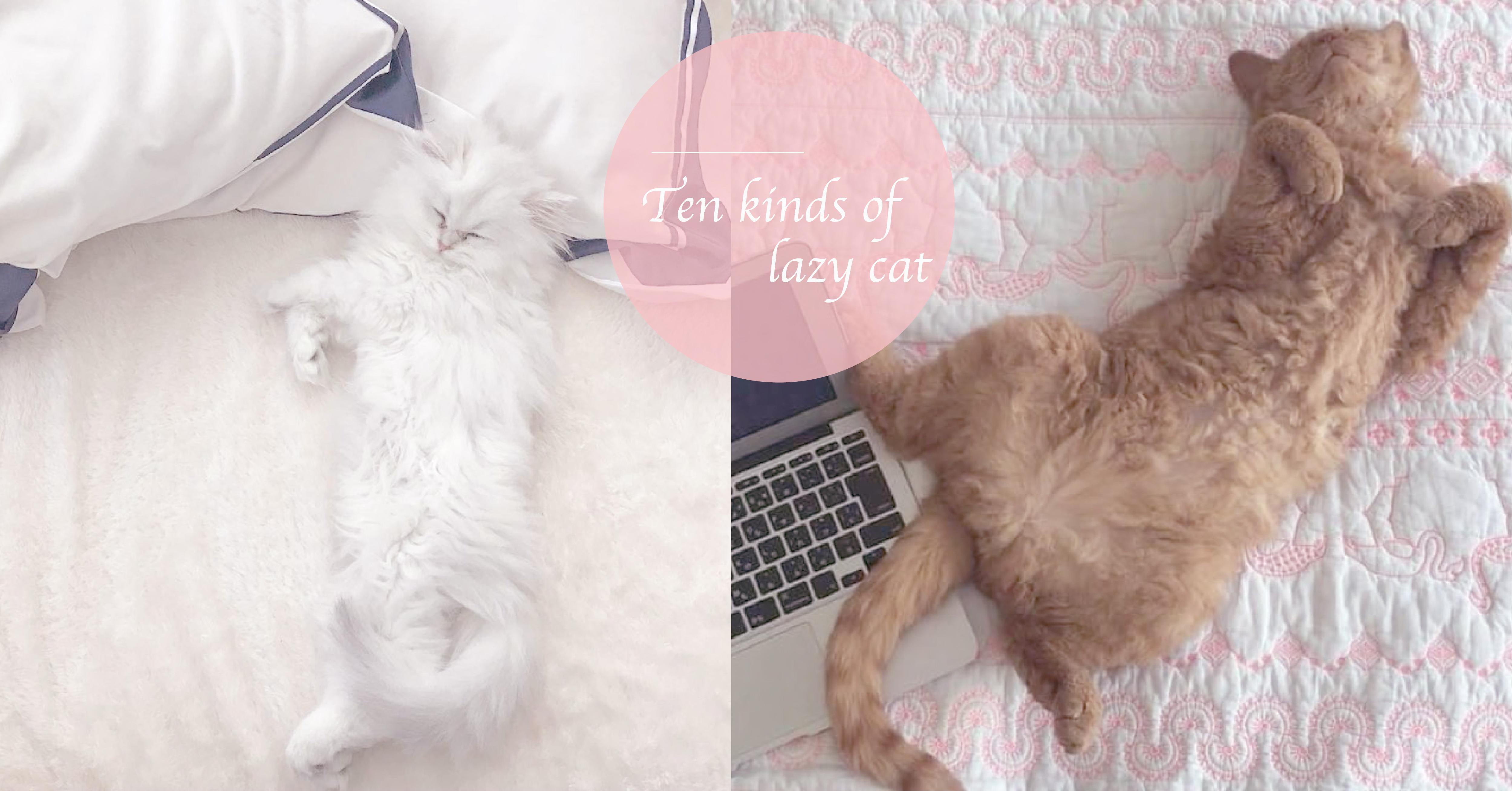 睡到投降也太可爱了吧?10种萌到捨不得叫他起床的猫咪睡姿