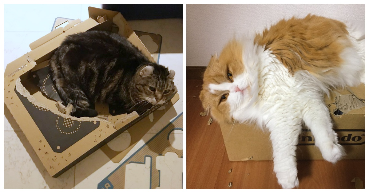 人猫间的纸箱争夺战开打!众所期待的Nintendo Labo新上市传出灾情惨重