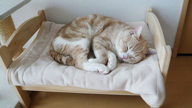 奴才还不快把床送来?流浪猫终于睡在床上的样子惹人热泪盈眶