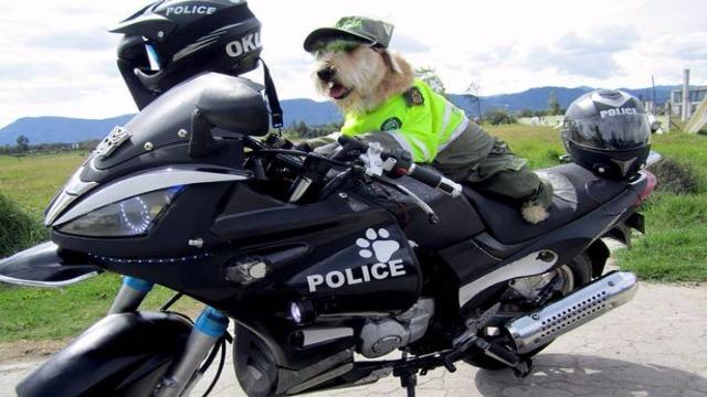 史上最萌的狗巡警!浪浪加入警察大队为市民服务