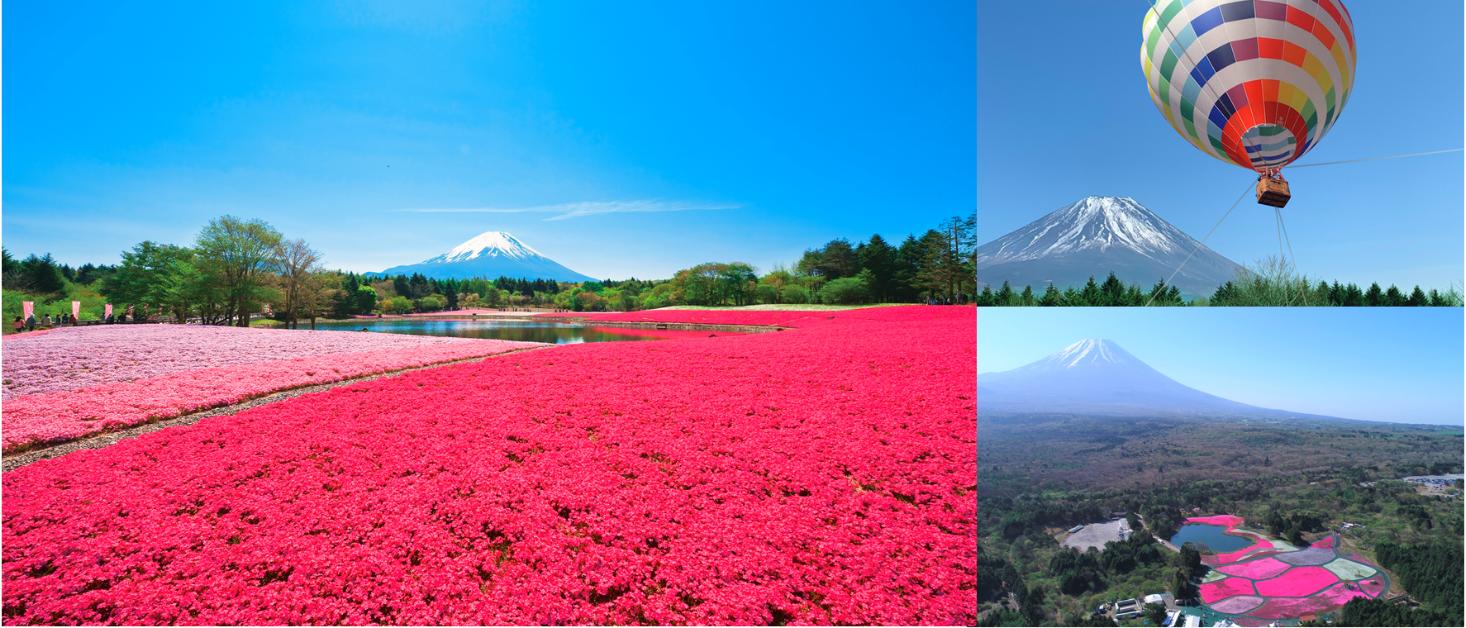 赏完樱花赏芝樱!欣赏绝景与品嚐美食就在「2019富士芝樱祭」